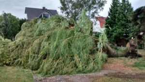 Beseitigung des Bäume nach dem Sturm 2015